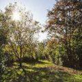 Sonnenpark. Foto © Markus Weidmann-Krieger, z.V.g.